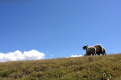 3 moutons